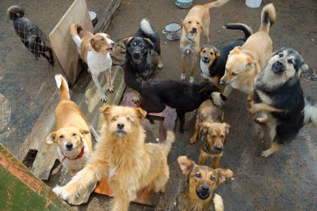 Мэрия выселяет приют для собак из-за жалоб соседей на громкий лай