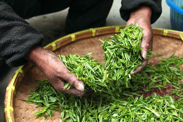 Россиян предупредили о пестицидах в двух популярных марках чая