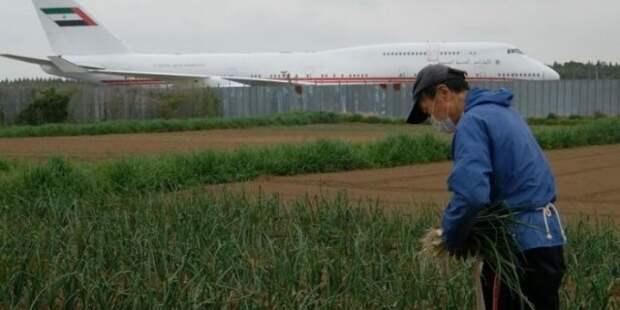 В центре японского аэропорта Нарита есть необычная ферма