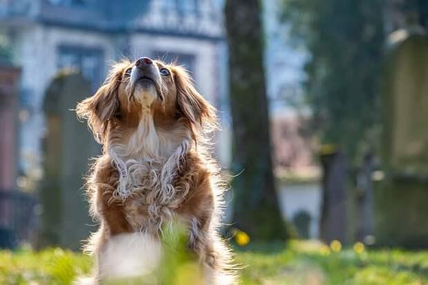 Собака, Внимание, Смешанной Породы Собак