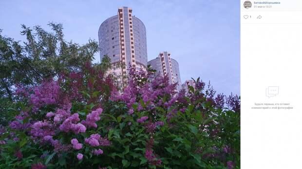 Фото дня: цветущая Хорошевка