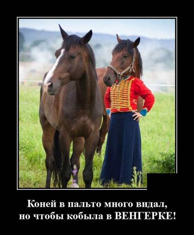 Демотиватор про коня в пальто