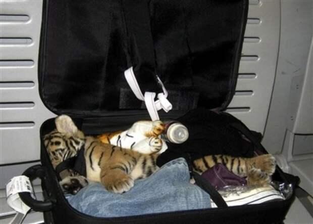 4. Контрабанда экзотических животных аэропорт, багаж, путешественники, фото, юмор