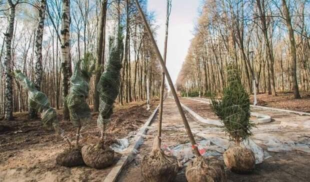 Напамять! Нижегородцы смогут высадить фамильное дерево впарке «Швейцария»