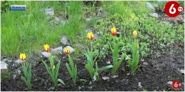 Горловчанам рассказали об особенности посадки цветов весной