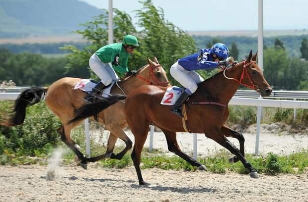 Неизвестное об ахалтекинских лошадях ахалтекинские лошади, коневодчество, кони, факты