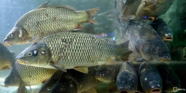 Рыбачите ли вы на водоемах Лосинки? – новый опрос жителей района