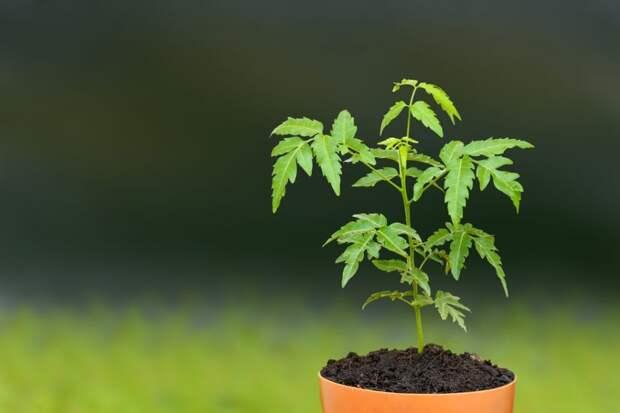 9 растений, которые даже ночью выделяют кислород