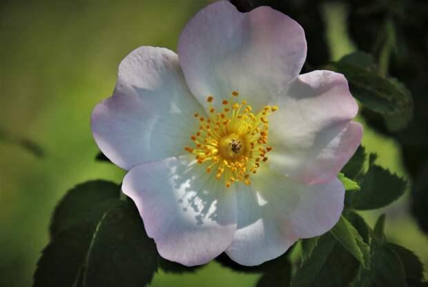 Более 1 миллиона наблюдений дикорастущих растений страны собрал проект МГУ «Флора России»