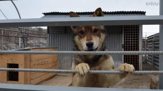 Без улицы, дома и приюта: как решают проблему бездомных собак в Новосибирске