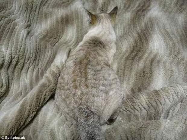 1. Тут главное - смотреть, куда садишься домашние животные, коты, кошки, маскировка, маскируется, прятки, смешные кошки