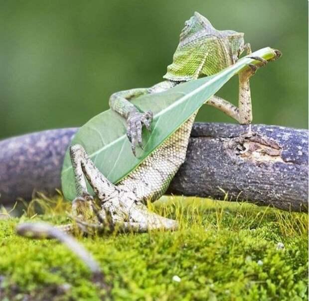 Релакс: ящерица спокойно отдыхает со своей гитарой животные, забавно, неожиданно, нужный момент, подборка, природа, фото, юмор