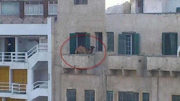 Свои заморочки и в Египте балкон, балконы, на балконе, прикол, че за хрень на балконе?, юмор
