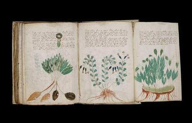 Невероятная рукопись Войнича.