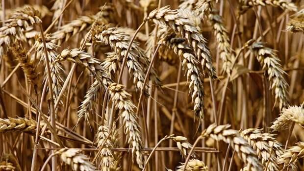 Аналитик Коган перечислил главные тенденции на рынке продовольствия