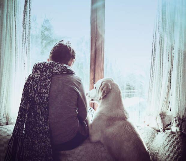 Трогательная дружба дружба, лабрадор, мальчик