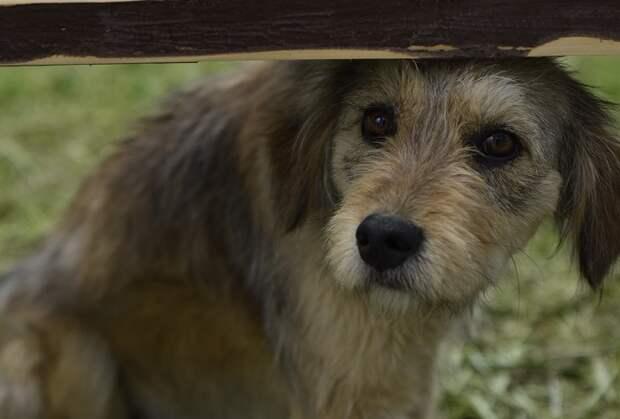 Субсидии на отлов бездомных животных получат 36 муниципалитетов Кубани