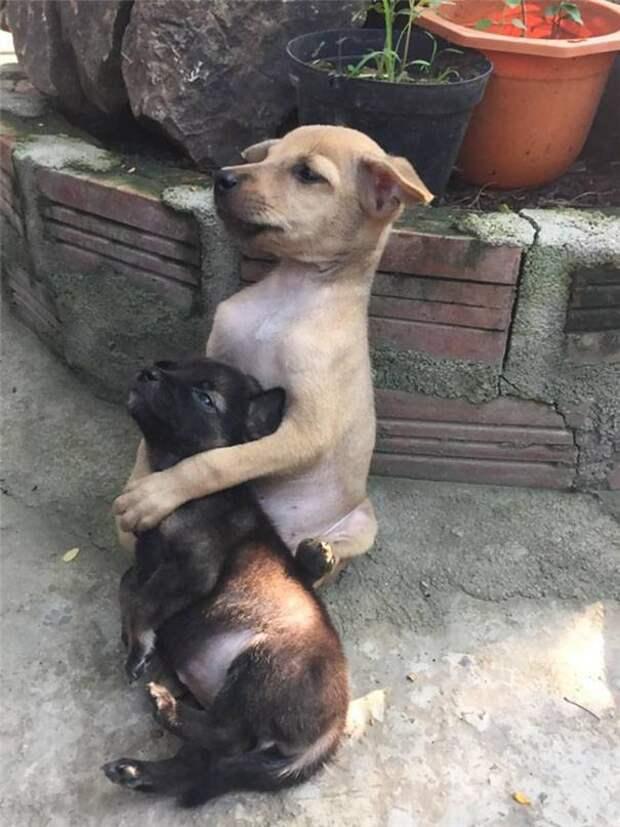 Обнимающиеся бездомные щенки из буддийского храма во Вьетнаме покорили весь мир