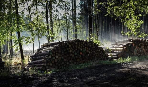 Два лесничих вКарелии осуждены завзятки