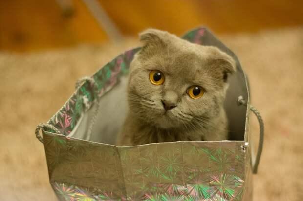 Загадочное мур и мяу: как понять язык вашей кошки