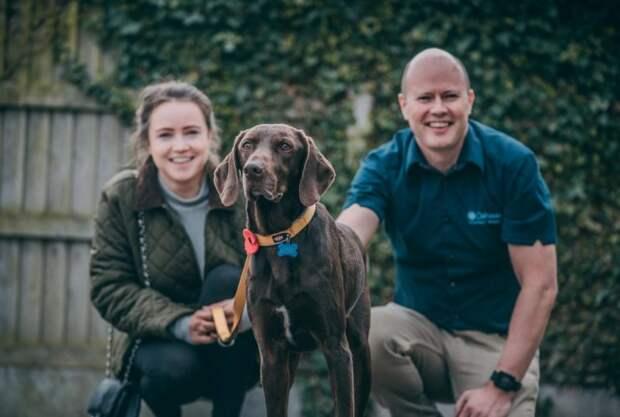Этот геройский пес пережил стрельбу и страшную аварию  животные, история, питомцы, служебная собака, собаки, фото