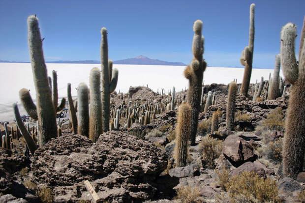 Исла де Пескадорес - каменные осыпи в солончаковой пустыне Уюни, Боливия красота, путешествия, фото