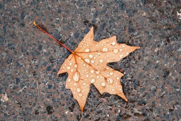 Понедельник в Удмуртии будет дождливым