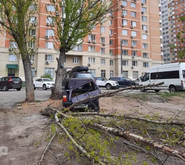 На улице Полины Осипенко дерево раздавило «Оку»