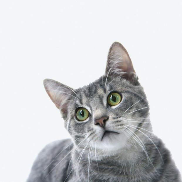 Стёпка. История одного умного кота