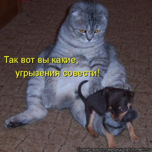 1556890839_kotomatricy-28 (500x500, 160Kb)