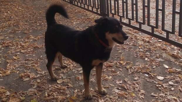 Грустного пса из приюта усыновила добрая семья, и с первой минуты он начал устанавливать свои правила в доме