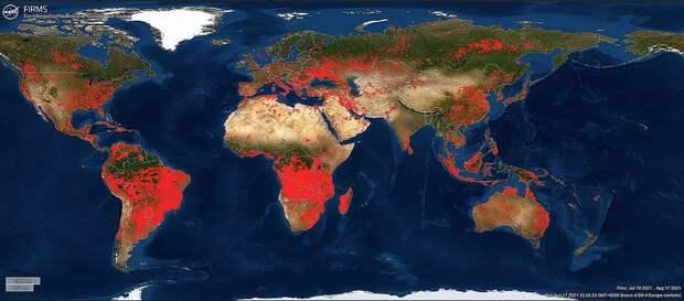Карта лесных пожаров, рост лесов и экспорт российского ламината
