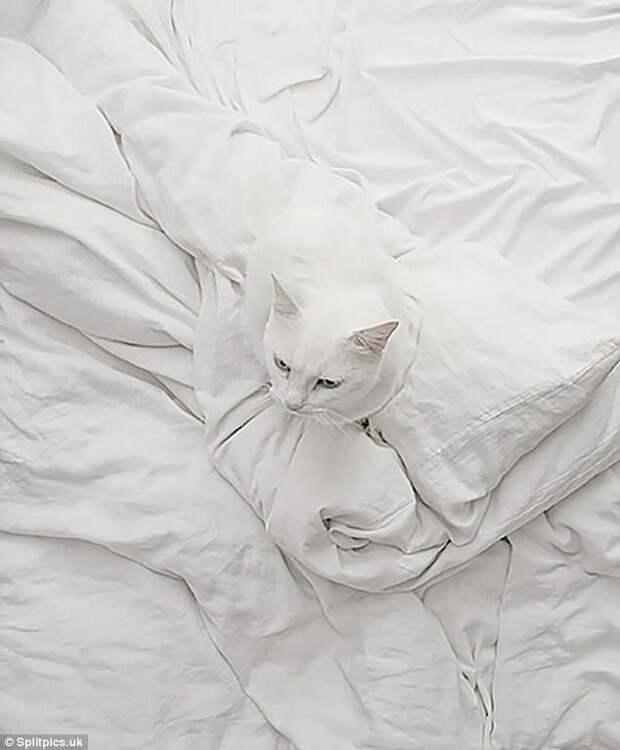 14. Белое на белом домашние животные, коты, кошки, маскировка, маскируется, прятки, смешные кошки