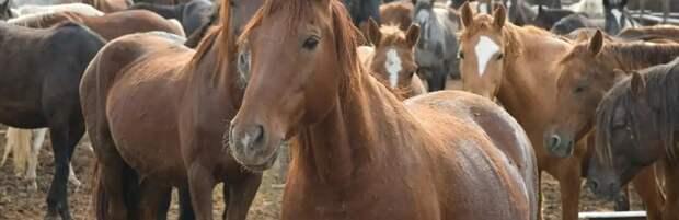 В Шымкенте создана откормочная площадка на 1000 голов лошадей