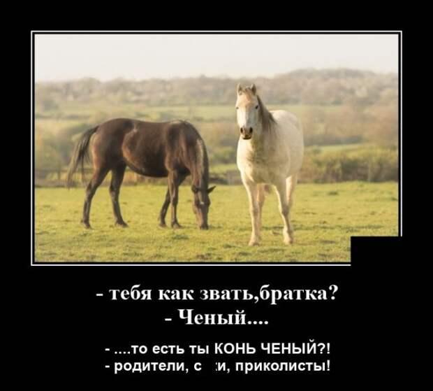 Демотиватор про лошадей