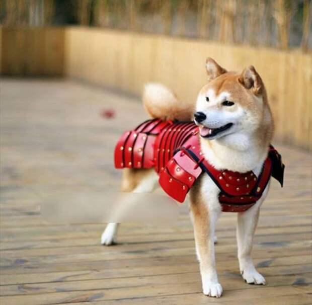Собака в броне