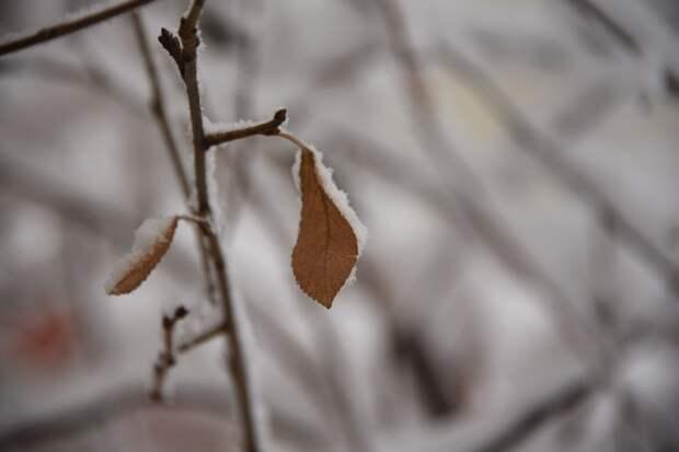 «Желтый» уровень опасности объявили в Московской области из-за заморозков