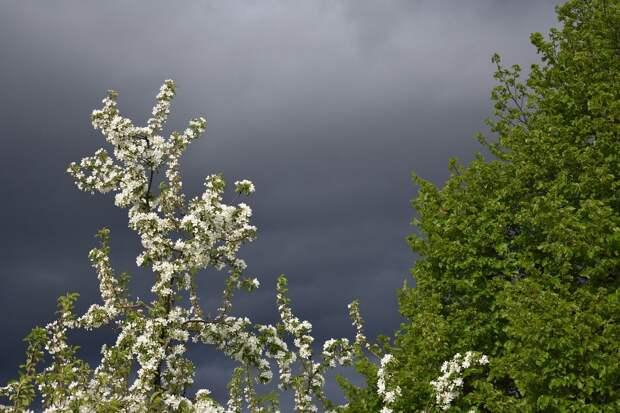 Дожди и грозы ожидаются в Удмуртии в течение недели