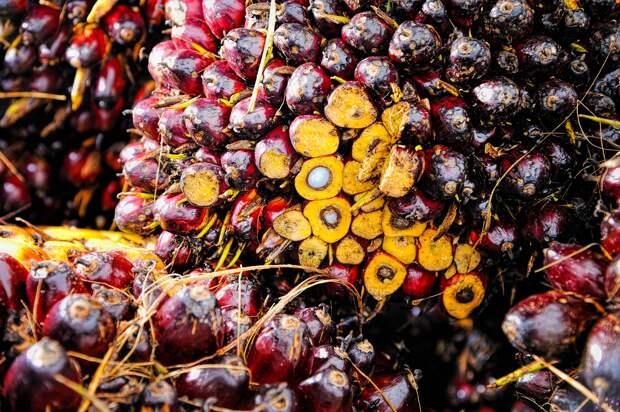 Госдума снизила НДС на фрукты и ягоды и повысила на пальмовое масло
