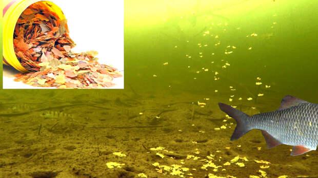 ВОТ КОМУ НРАВЯТСЯ ХЛОПЬЯ для аквариумных рыбок! Подводная съемка