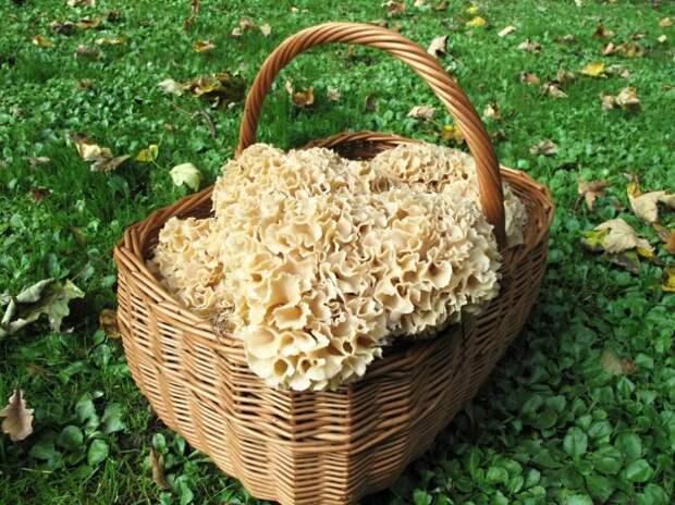Лучшие грибные места мира