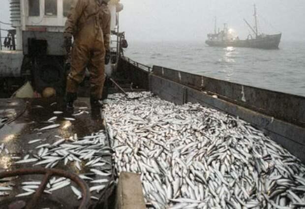 Россия дала достойный ответ китайцам, заблокировавшим поставки рыбной продукции из РФ