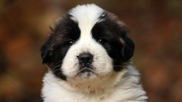 Мошенники обманули петербурженку при покупке щенка