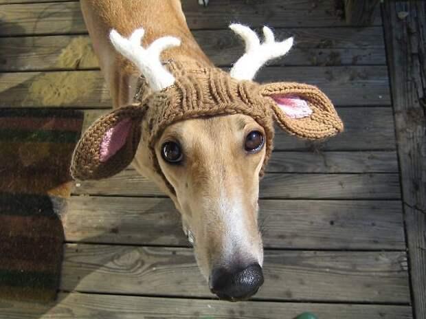 Собачка-олешка вязание, новый год, подарки