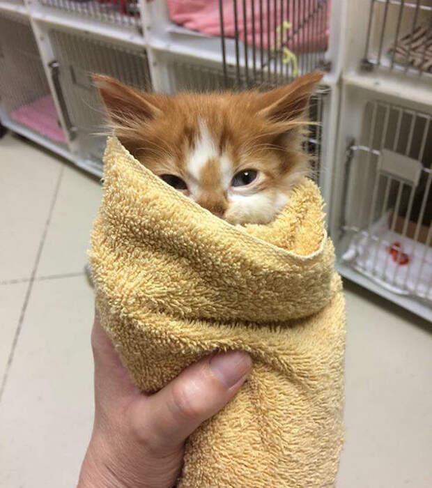 20 самых милых котят, на которых приятно посмотреть