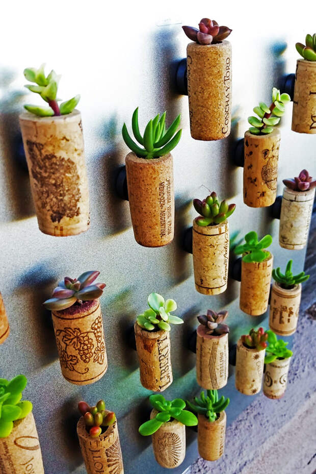 Succulent Wine Cork Favors With Cuttings