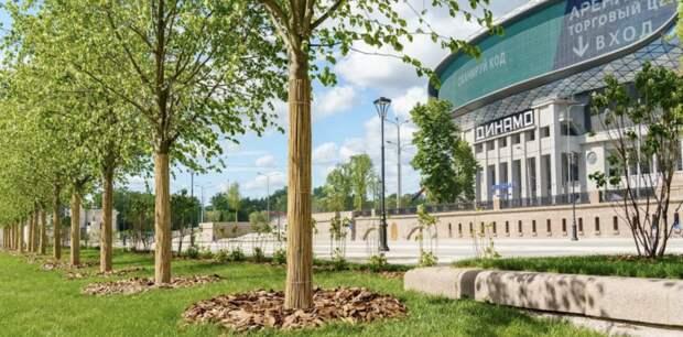 У станции «Петровский парк» высадили около 300 деревьев и кустарников