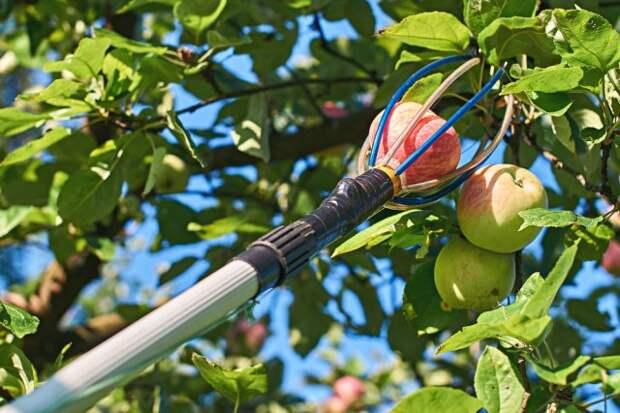 Плодосборник для яблок