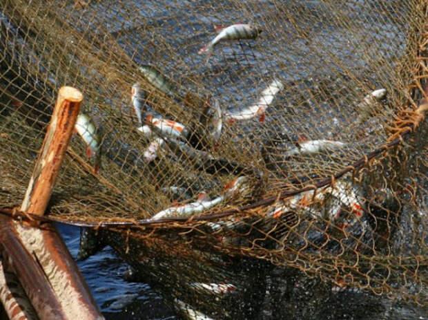 """Картинки по запросу """"В Новосибирской области браконьеры поплатились за рыбалку в заказнике"""""""