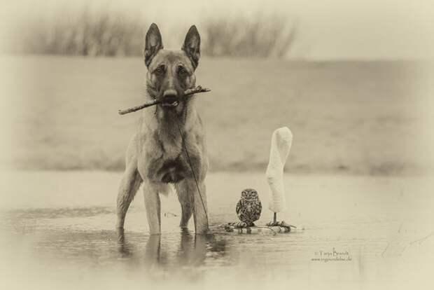 Истории о животных. Удивительная дружба между разными животными. Три сюжета